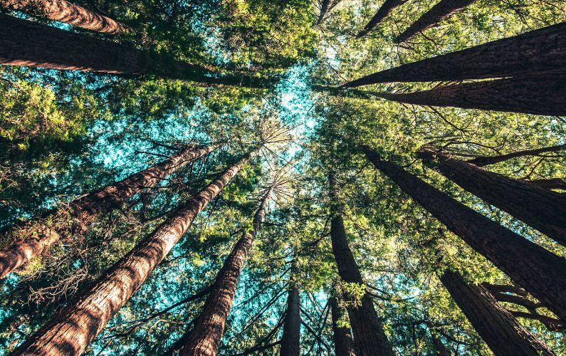 Come riconquistare il contatto con la Terra